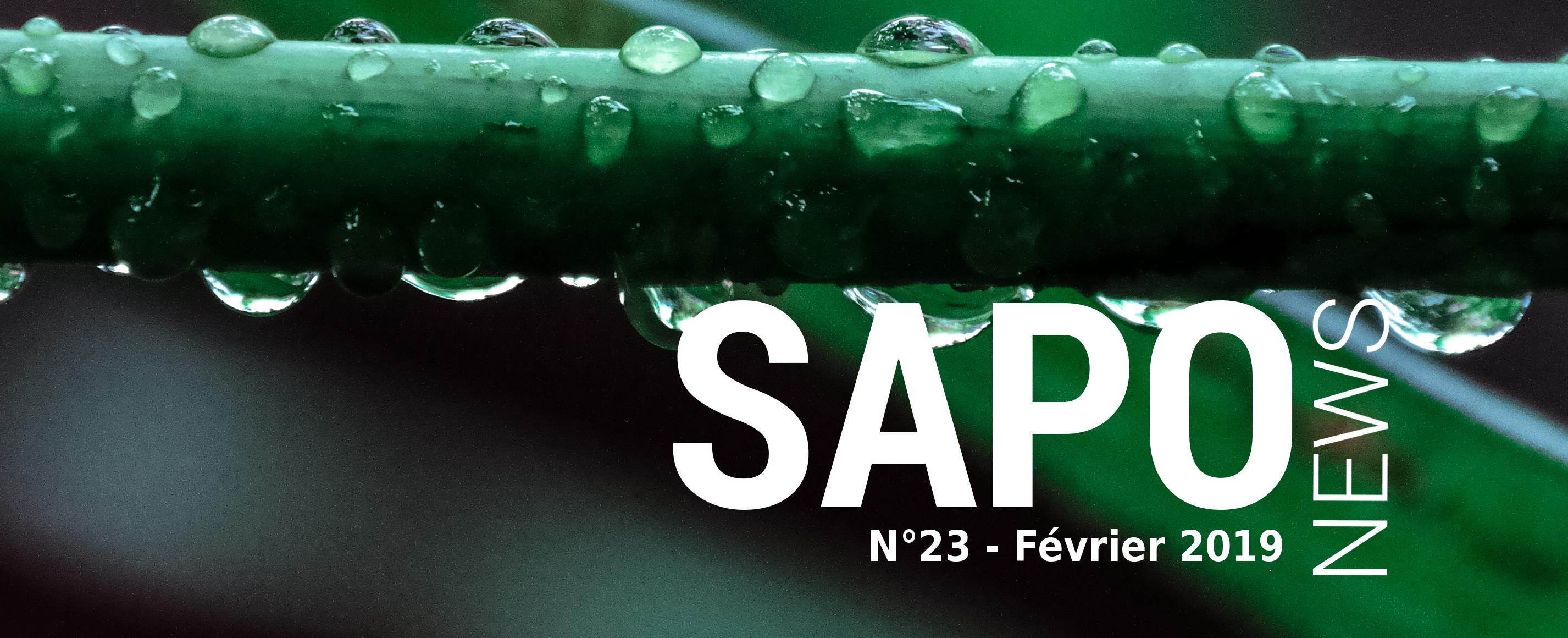 SAPONEWS 23